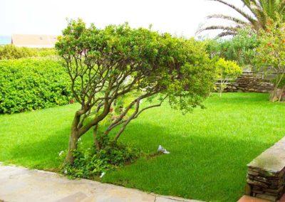 realizzazione-giardini---giardinaggio---Green-Sea-Srl--Sardegna-Sassari-Olbia.jpg-giardino-con-prato