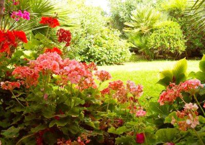 realizzazione-giardini---giardinaggio---Green-Sea-Srl--Sardegna-Sassari-Olbia.jpg-prato-e-fiori---geranei