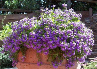 realizzazione-giardini---giardinaggio---Green-Sea-Srl--Sardegna-Sassari-Olbia.jpg3