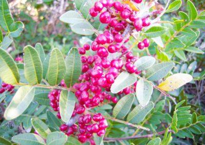realizzazione-giardini---giardinaggio---Green-Sea-Srl--Sardegna-Sassari-Olbia.jpg-4